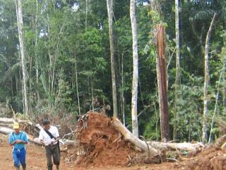 Amazonía Ecuatoriana, os bosques desaparecen